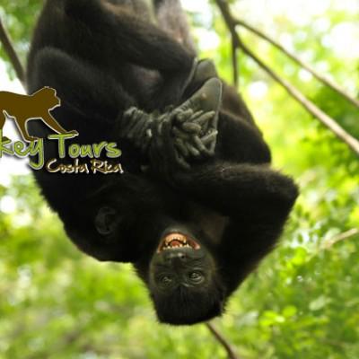 Costa Rica Monkey Tours, Green, Nature, Fun, Central America