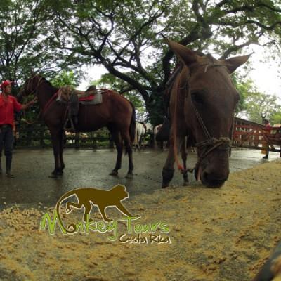 Brown horses eating