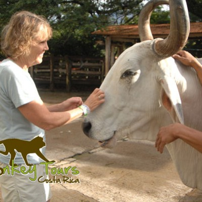 Pet the animals and experience this amazing adventure