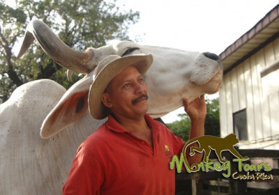 Authentic cowboys in Costa Rica