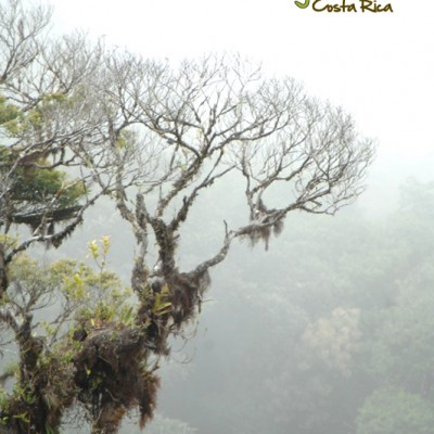 Nature in the cloudforest, living trees