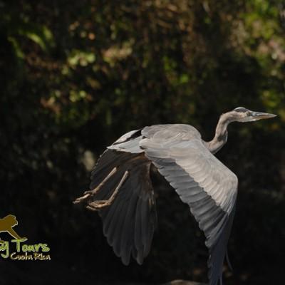 Costa Rica Palo Verde National Park boat tour