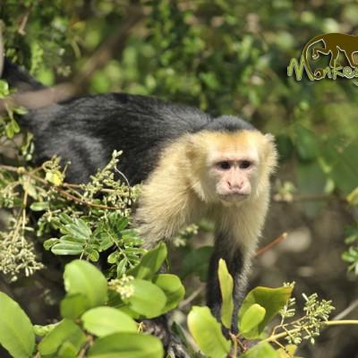 Love for Monkeys