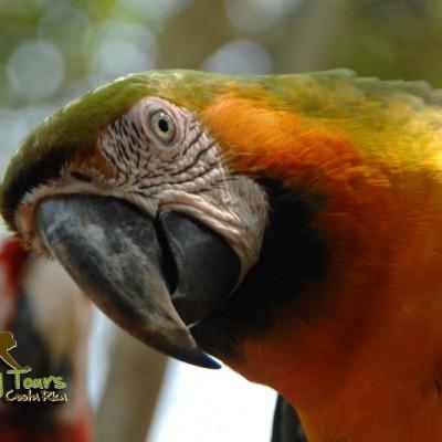 Nature Macaw