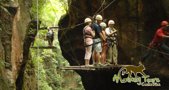 canopy guanacaste