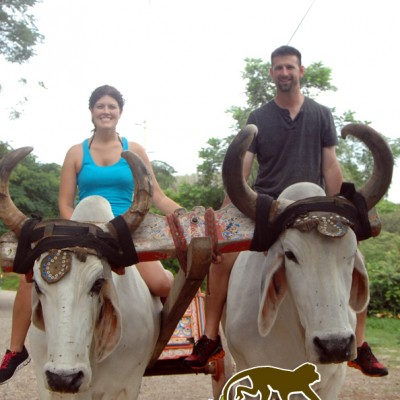 Pose with the Costa Rica cattle with Monkey Tours