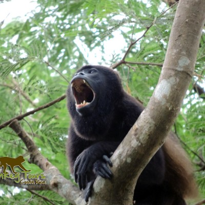 Congo Costa Rica with Monkey Tours