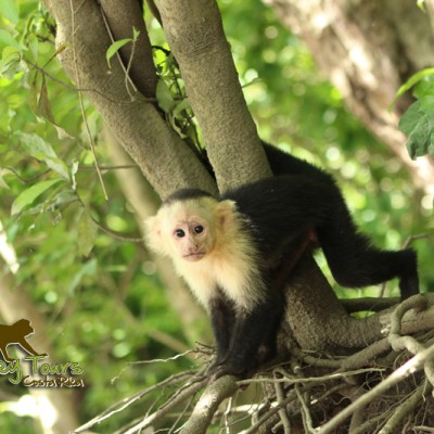 costa rica monkey tours