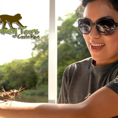Experience in real life the Costa Rica insects