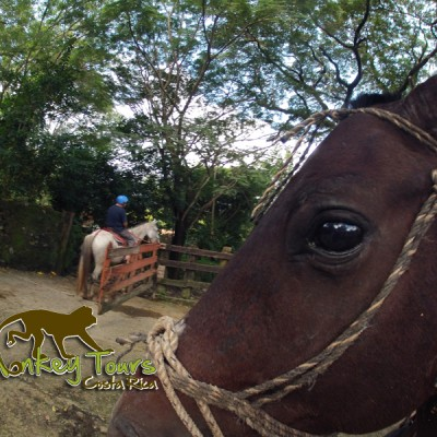 Horseback Riding in Costa Rica with Monkey Tours