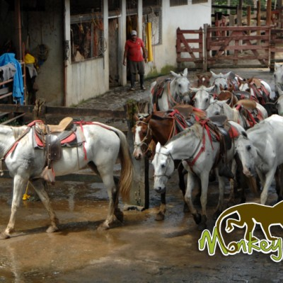 Enjoy the horseback riding tours with Costa Rica Monkey Tours