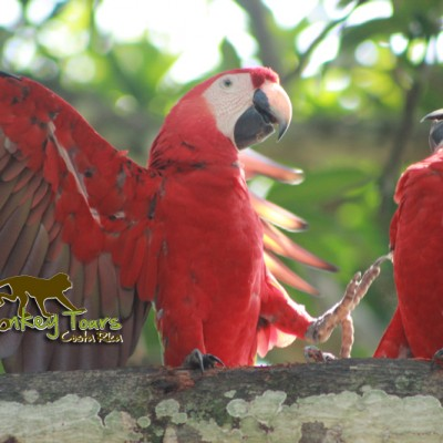 Macaw birds in their natural habitat