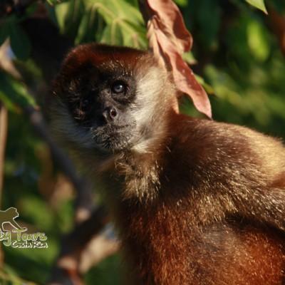 Monkey in its natural habitat