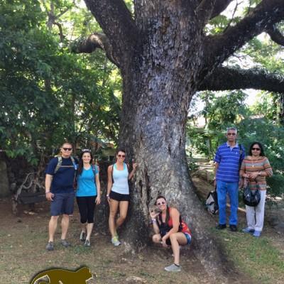 Big tree tourists costa rica