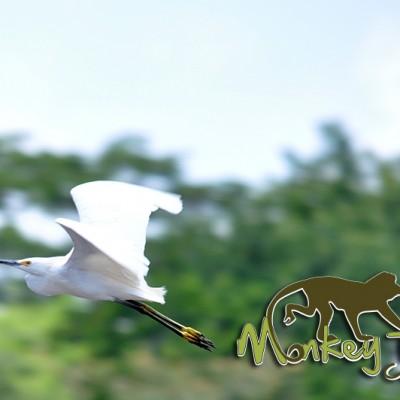 White Garza Bird Watching Palo Verde Costa Rica Guided Tour 118