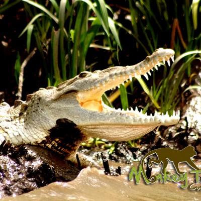 Palo Verde boat tour crocodile Costa Rica Tour 120