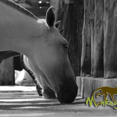 Hacienda Guachipelin horses Costa Rica Tour 119