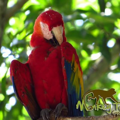 Macaw Bird Costa Rica Tour 115
