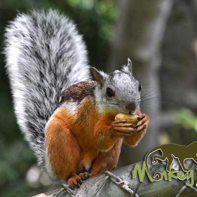 Squirrel Costa Rica Guided Adventure 123
