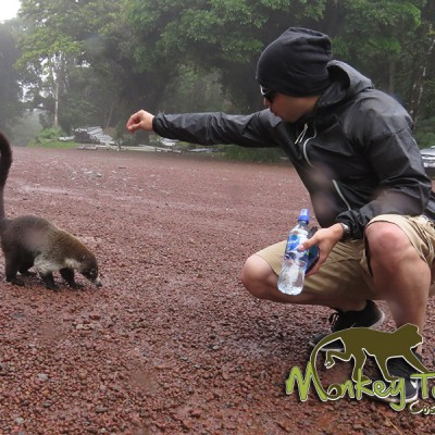 Coati Animal Costa Rica Adventure Getaway 135