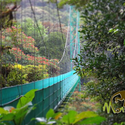 Sky Walk Bridge Monteverde Cloud Forest Costa Rica Getaway 129