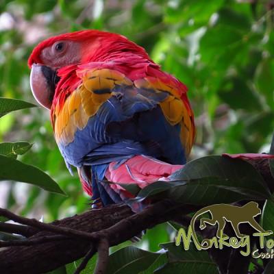 Macaw Bird Tour Costa Rica and Nicaragua Adventure Tour 74