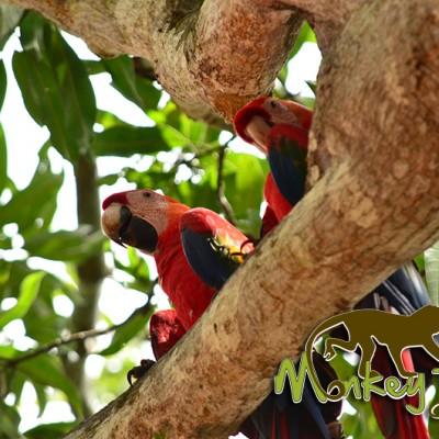 Macaws Costa Rica Adventure Getaway 132