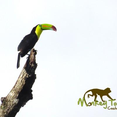 Beautiful Toucan Costa Rica and Nicaragua Getaway 73