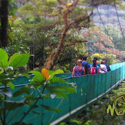Sky Walk Monteverde Bridge Tour Costa Rica Getaway Trip 136
