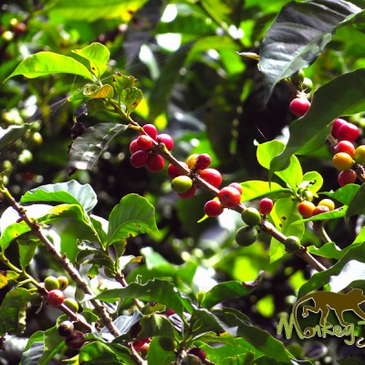 Coffee Plantation Costa Rican Guided Getaway 136