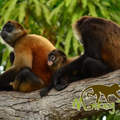 Spider Monkeys Isletas Boat Tour Granada Costa Rica and Nicaragua Getaway 98